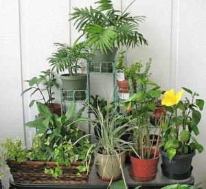 Растения для озеленения квартир